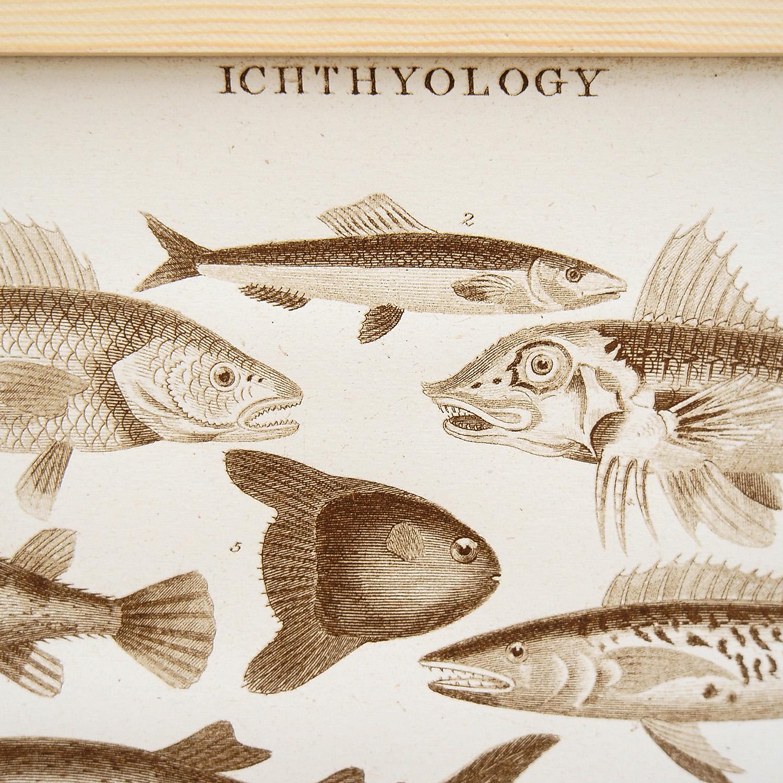 Siebdruck Ichthyology